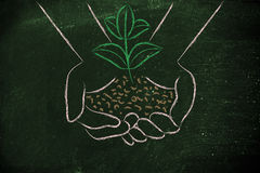 Concept of green economy, hands holding new plant. Green economy and sustainability: hand holding small plant with newborn leaves Stock Images
