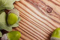 Concept of Green oak leaves and acorns on the background a rustic textured wood. Copy space, top view. Stock Image
