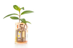Concept of green plant grow on EURO currency note Royalty Free Stock Image