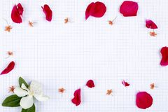 A concept of a greeting card with white squared paper background copy space for text and sprinkle rose petals stock photo