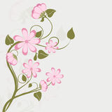 Concept of greeting cards with vine of flowers. Royalty Free Stock Photos