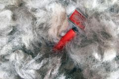 Concept grooming spring season, shedding dog wool. Shedding tool - rakers brush for Dog. Slicker brushes in pile of wool. royalty free stock images
