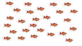 Concept group - fish swim together Royalty Free Stock Images