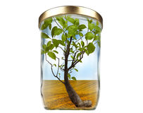 Concept for growing, ecology or zero waste. Tree in a jar, Concept for growing, ecology or zero waste royalty free stock images