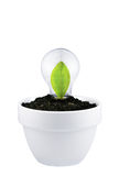 Concept of growing green ideas isolated on white stock photo