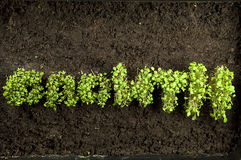 Concept Growth. Growth written in words with cress on dark earth background Stock Photo