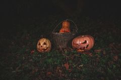 The concept of Halloween. Evil scary pumpkin in a basket in the forest. mystical jack lantern in the dark. The concept of Halloween. Evil scary pumpkin in basket royalty free stock image