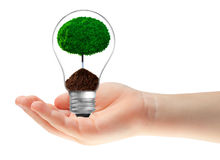 Concept. Hand with ecological lamp Stock Image