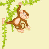 Concept of a hanging monkey. Royalty Free Stock Photos