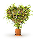 Concept of health. The plant in form of heart. Royalty Free Stock Images