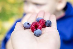 Concept of healthy food. Fresh berries as symbol of whole food.  royalty free stock images