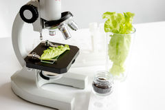 Concept healthy food inspection herbs in laboratory Stock Image