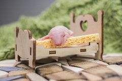 The concept of healthy sleep. Baby mouse lying on the cot. A newborn rat cub is sleeping. Little bald rodent stock image