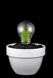 Concept het kweken van groene ideeën. Stock Foto's