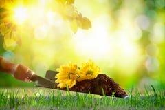 Concept het planten en het tuinieren in de lente met aardbackgrou Stock Fotografie