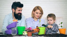 Concept het samenwerkingswerk Een kleine jongen met een schouderblad helpt de bloemen van de oudersinstallatie in potten stock videobeelden