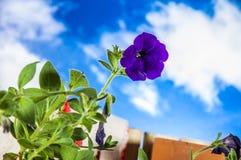 Concept het tuinieren, aardthema Stock Foto