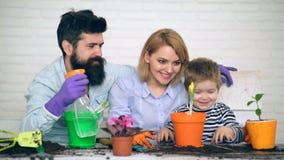Concept het tuinieren De familie in en spelvorm die bloeit planten water geven Een kleine jongen en zijn ouderswater bloeien stock footage