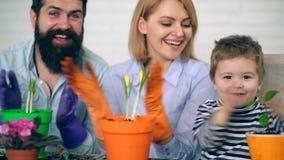 Concept het tuinieren De familieinstallatie en geeft de bloemen in de lente water Vader, moeder en zoonsklap in de palm en stock videobeelden