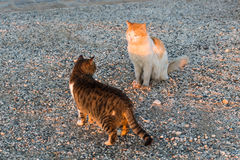 Concept of homeless animals - Stray cat on the street.  Stock Image