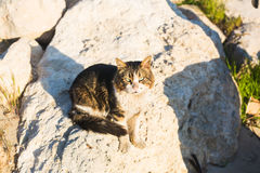 Concept of homeless animals - Stray cat on the street.  Royalty Free Stock Photography