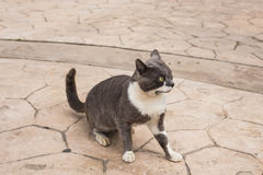 Concept of homeless animals - Stray cat on the street.  Royalty Free Stock Photos