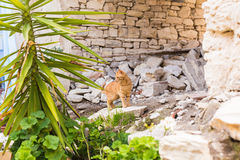 Concept of homeless animals - Stray cat on the street.  Royalty Free Stock Images