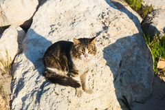 Concept of homeless animals - Stray cat on the street.  Stock Photos