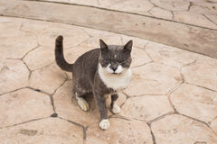 Concept of homeless animals - Stray cat on the street.  Stock Photo