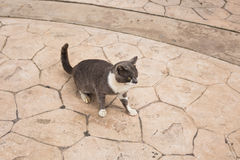 Concept of homeless animals - Stray cat on the street.  Stock Photography