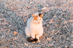 Concept of homeless animals - Stray cat on the street.  Stock Images
