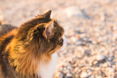 Concept of homeless animals - Stray cute cat on the street. Concept of homeless animals - Stray cat on the street Royalty Free Stock Photography