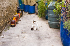 Concept of homeless animals - Stray cute cat on the street. Concept of homeless animals - Stray cat on the street Royalty Free Stock Photo