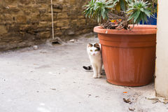 Concept of homeless animals - Stray cute cat on the street. Concept of homeless animals - Stray cat on the street Royalty Free Stock Photos