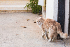 Concept of homeless animals - Stray dirty sadness cat on the street Royalty Free Stock Photos