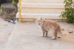 Concept of homeless animals - Stray dirty sadness cat on the street Stock Photography