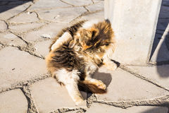 Concept of homeless animals - Stray dirty sadness cat on the street Royalty Free Stock Photo