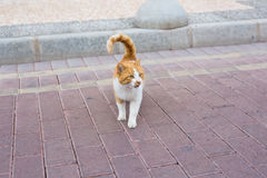 Concept of homeless animals - Stray dirty sadness cat on the street.  Stock Images