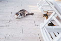 Concept of homeless animals - Stray dirty sadness cat on the street.  Royalty Free Stock Images