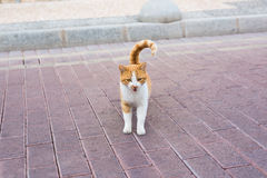 Concept of homeless animals - Stray dirty sadness cat on the street.  Stock Photos