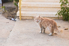 Concept of homeless animals - Stray dirty sadness cat on the street.  Royalty Free Stock Photos