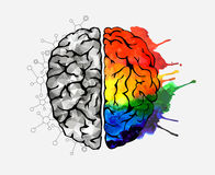 Concept of the human brain Royalty Free Stock Photo
