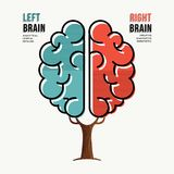 Human brain concept for right and left hemisphere vector illustration