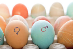 Male and female symbol on eggs. Concept image of colored eggs with a male and female symbol royalty free stock image