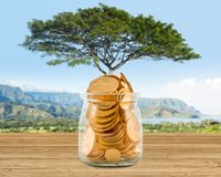Concept image of wealth growing on trees out of gold coins. Large tree growing out of a glass savings jar full of pure gold coins to illustrate investment stock image