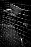 A concept of imprison with sadness emotion. Hornbill in cage in monochrome photography royalty free stock images