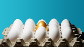 Concept of individuality, exclusivity, better choice. One golden egg among white eggs in carton tray on blue background Stock Photography