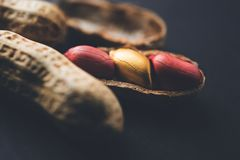 Concept of individuality, luck,value,exclusivity and better choice. Golden peanut or ground nut, standing out amongst normal peanu. Ts, over black or white royalty free stock image