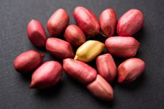 Concept of individuality, luck,value,exclusivity and better choice. Golden peanut or ground nut, standing out amongst normal peanu royalty free stock photography