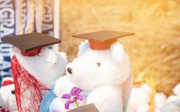 Concept internationale gediplomeerde studie, graduatie zwart GLB over Teddybeer die achterhoed dragen bij openlucht Onderwijscert royalty-vrije stock afbeelding